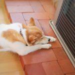 パッシブハウスとは。高気密高断熱住宅とは何が違うの?
